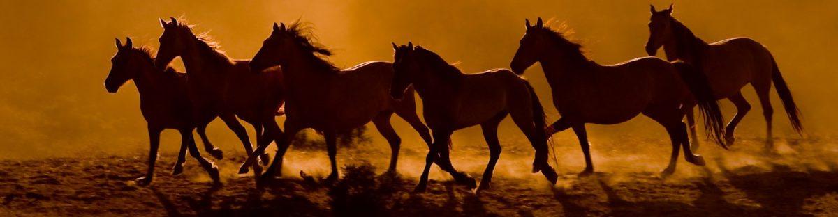 Mustang Monday